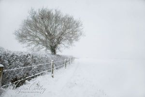 Footpath After Snow