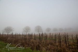 Into the Mist 2